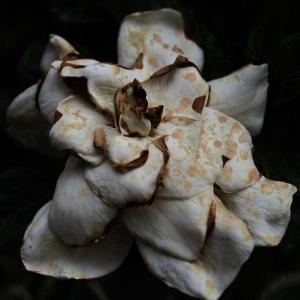 I fiori del male